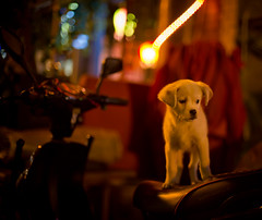 Sad and Alone at Night (Stuck in Customs) Tags: china city travel dog digital puppy photography blog high friend waiting asia alone republic dynamic stuck beijing september east photoblog software processing motorcycle metropolis imaging lonely  prc northern companion range hdr tutorial trey peking travelblog customs 2010 municipality bijng ratcliff northernchina hdrtutorial stuckincustoms treyratcliff photographyblog peoplesrepublicofchina stuckincustomscom nikond3s