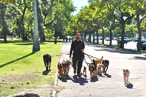 One of Buenos Aires' dog walkers! These guys (and gals) are found throughout all the parks in the cities, with at least this many dogs in tow.  Although most dogs seem to spend a lot of time offleash as well, and are completely trained and non-agressive.