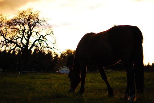 Sage's sunset