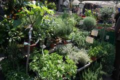 basel farmers market 140