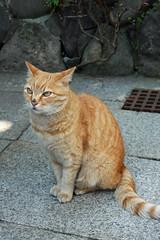 江の島めぐり―岩本楼の猫(Cat at Iwamoto hotel, Enoshima, 2011)