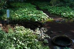 わき間 (GenJapan1986) Tags: 柿田川公園 清水町 静岡県 2010 shizuoka japan 日本 travel 旅行 nikond90