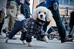 Strikkahund (frifoto.no) Tags: hund tog asfalt