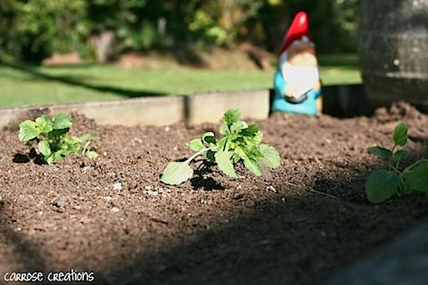 SHS 24.04.11 Lawn & Garden