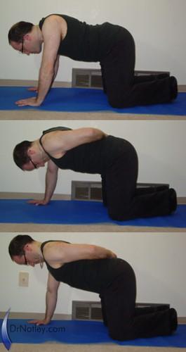 Chiropractor exercise - Quadruped neck retraction