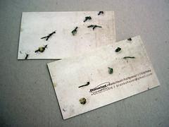Ants version (milena savic) Tags: illustration bug insect print design graphicdesign ant ants minimalism simple businesscard mravi businesscarddesign mrav milenajanicijevic milenasavic disinsectant