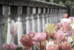 Keep smiling - it makes people wonder what you've been up to  =) ('Carmen' {catching up!}) Tags: stone fence dof tulips bokeh explore oldworld stonefence hff fencefriday happyfencefriday oldworldfence