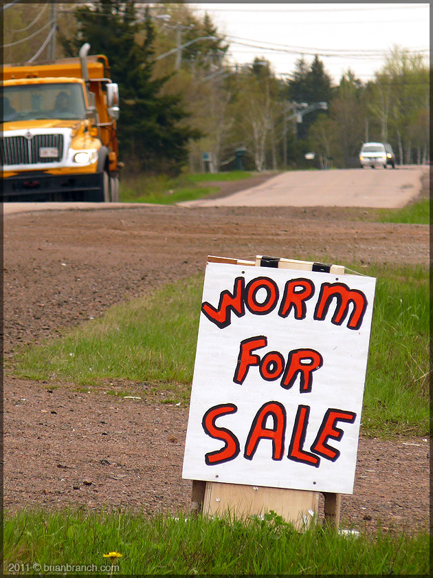 P1150283_worm for sale