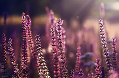 :) (seyed mostafa zamani) Tags: life city flowers light sunset red flower color green love beautiful beauty garden happy iran good dream azerbaijan romance east if wish lover cosh marand