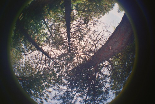 Tree Party