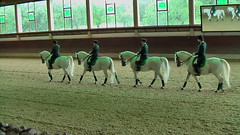 "Lipizzaner Dressage • <a style=""font-size:0.8em;"" href=""http://www.flickr.com/photos/64637277@N07/5890339571/"" target=""_blank"">View on Flickr</a>"