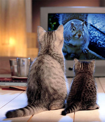 Cat TV (Lana Pahl / Country Star Images) Tags: sliderssunday artdreamedartiticand