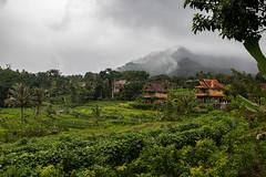 Rice paddies in Sidemen (Tim&Elisa) Tags: bali indonesia asia canon ricepaddies riceterrace sidemen