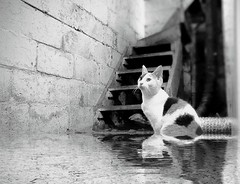 Eden Abandoned ~ (K.Chris ~AlwaYs LeaRning~) Tags: abandoned cat water urban decay flood blackandwhite monochrome stairs