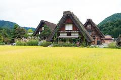 Iconic view (Wunkai) Tags: nogun gifuken japan shirakawa  paddy    ogimachi  thatchedroof
