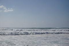 DSC05361 (neilreadhead) Tags: awt1 hawaii oahu waimeabay