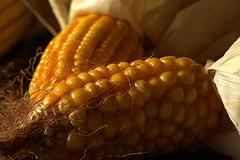 Macro Mondays   CORN COBS (vittorio_colombo) Tags: d800 nikkor1050mm inarow corncobs macromondays