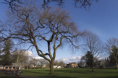 Wallace Park