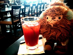 Quatchi's last photo at YVR