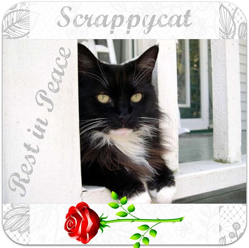 WCB #303 RIP Scrappycat