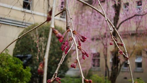 2011/04 京都府庁旧本館 #07
