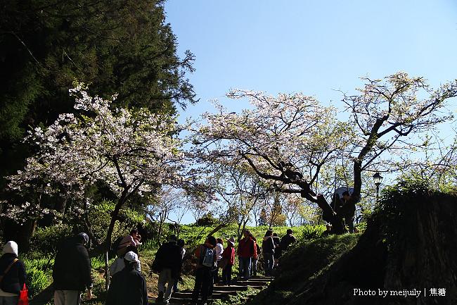 2011阿里山櫻花季晴天版02