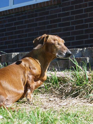 2011-04-05 - Ralphie - 0023