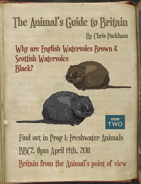 'Animal's Guide' Question of the day: Why are Scottish watervoles black & English ones brown?