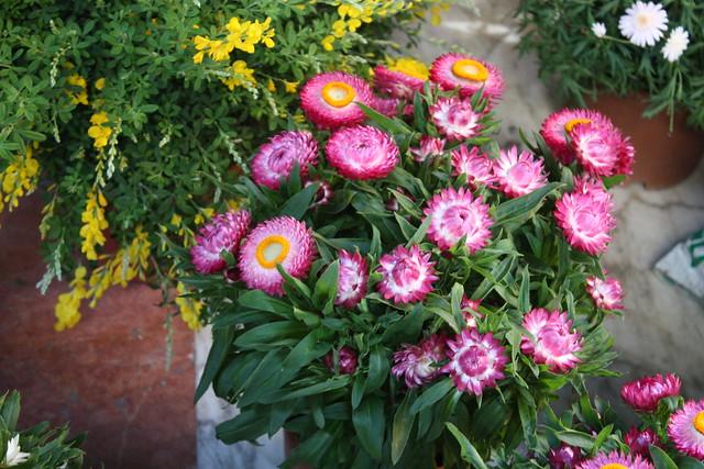 flower market florence
