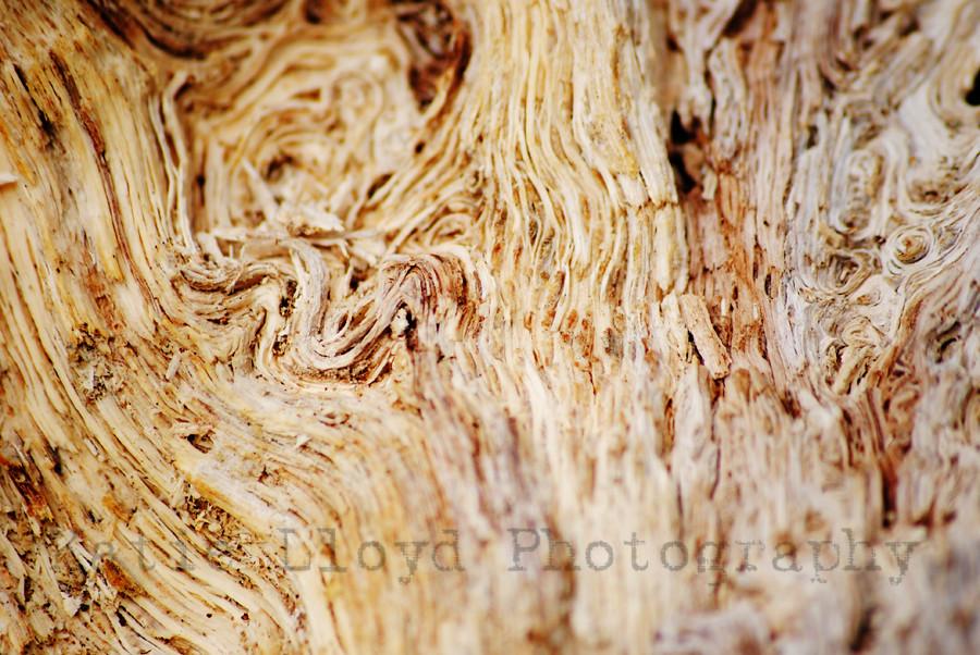 Tree Texture 2