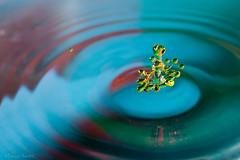 Octopus (Franois Doroth) Tags: reflection water reflections drops waterdrop eau flash drop reflet waterdrops reflets goutte collision gouttes highspeedphotography gouttedeau gouttesdeau strobist cameraaxe franoisdoroth francoisdorothe