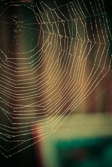 090411_ Spider's Web #3
