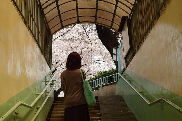 出口の桜色