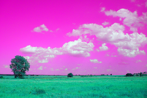 Lucid Landscape