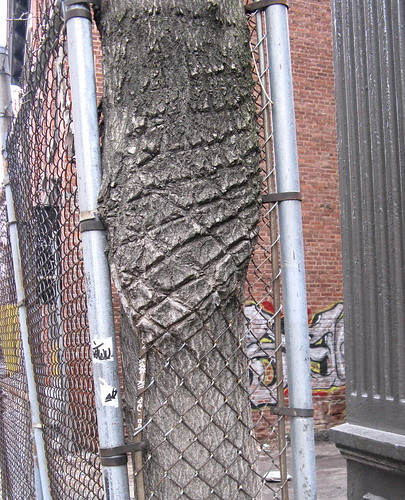 Trunk of Tree in a Chain-Link Fence