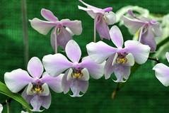 Orchidee (Michael Döring) Tags: orchidee bochum d300 botanischergarten ruhruniversität querenburg michaeldöring sigma150makro