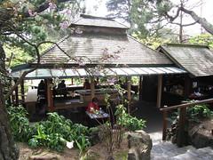 IMG_2777 (dinaxpresspr) Tags: sanfrancisco goldengatepark gardens sushi cherryblossoms steppingstones mochi japaneseteagarden teahouse giftshop drumbridge cherryblosssoms