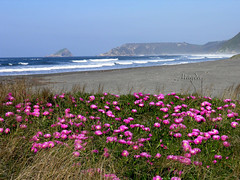 Playa y Flores (magda196) Tags: