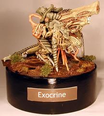 exocrine_01-1