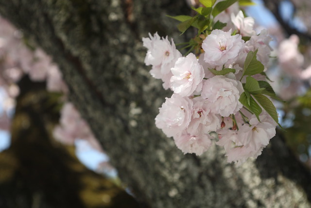 晩春の花房