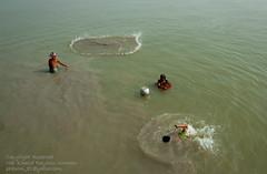 Life and Livehood-I (Taste_of_Cherry) Tags: life woman fish man net water swim river fishing bath child lifestyle pot bangladesh padma munsigonj maowa vagyakul
