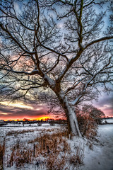 Snowy (Lapse of the Shutter) Tags: sunset snow cold beautiful freedom energy solitude branches joy relaxation elegance escapism purity tranquilscene beautyinnature idyliic