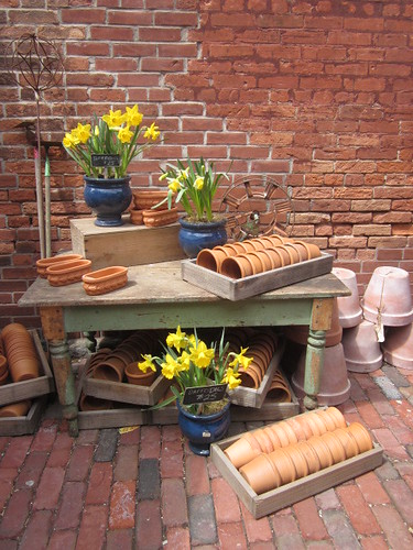 The daffodils in the distillery district outiside displayed for the Vintage Gardener the week before mothers day.