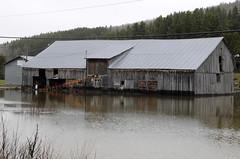 _SFP8881a_1000 (lavantage.qc.ca) Tags: rivière mitis steangèle