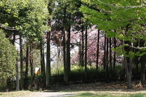 涼しい風をうけて・・・ / The shade of  trees