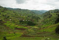 Ugandan Terraces 1/4