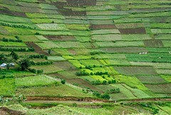Uganda Terraces 4/4