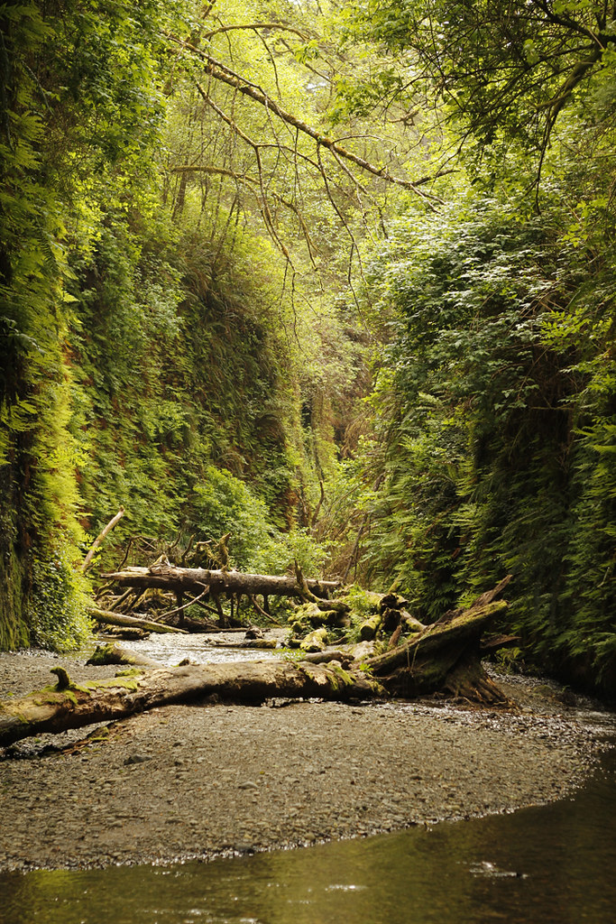 fern canyon 2