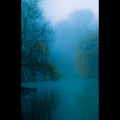 Alone (Magic Theatre [OFF}) Tags: blue mist reflection water fog blu willow nebbia acqua riflessi vatten reflektion bl dimma foschia bluemonday