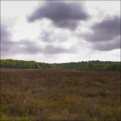 Heathland (*ian*) Tags: sky cloud storm tree green nature forest square landscape nationalpark cloudy stormy hampshire heath marsh favourite newforest bigemrg pigbush gettysubmitted